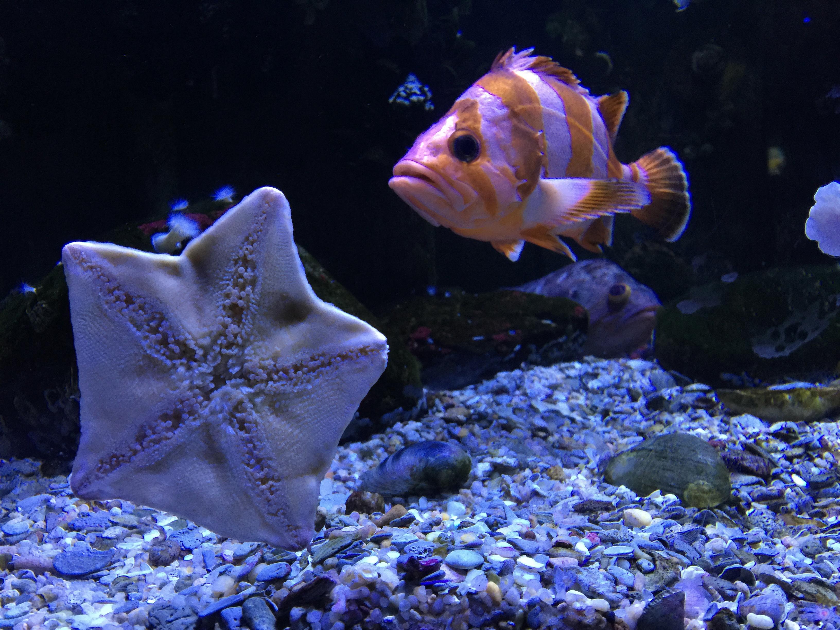 A weekend in myrtle beach south carolina full time explorer - Aquarium nemo ...