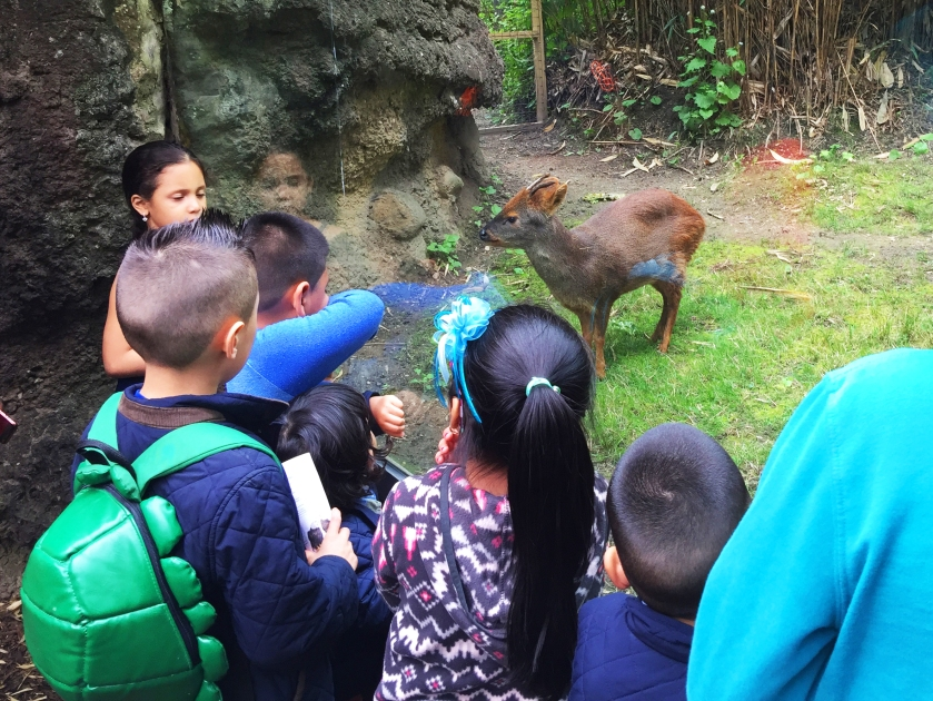 Things To Do in Flushing on a $30 a Day Budget queens zoo worlds smallest deer