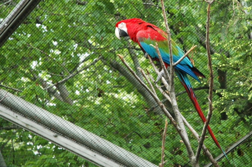 day on a dime flushing queens full time explorer travel new york city things to do queens zoo parrot atrium
